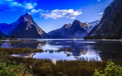 Science Careers in New Zealand